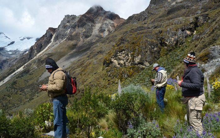 Myxomycetes en las laderas del Nevado Huascarán, la montaña más alta de la zona intertropical de América