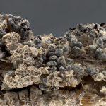 Diderma crustaceum