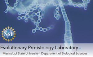 Laboratorio protist